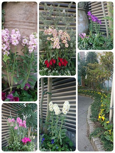 冬仕様の花壇